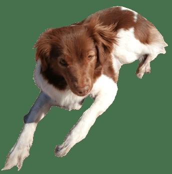 Martinas Hund - Heilarbeit