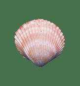 Praxis Sonnenklang - Heilarbeit für Mensch und Tier - Muschel 2